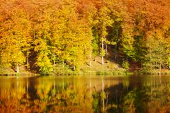 Красочные лес и озеро осени Стоковая Фотография RF