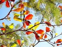 Красочные листья в воздухе, красный, зеленый, желтом стоковые изображения
