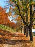 Красочные листья в осени в Swabian Стихарь стоковое изображение rf