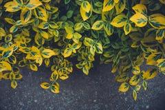 Красочные листья в саде Стоковые Фотографии RF