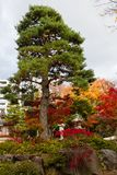 Красочные листья деревьев в японском саде стоковое фото