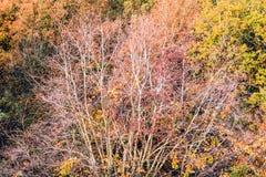 Красочные листья и ветви дерева в осени Стоковая Фотография