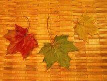 Красочные листья осени, Литва Стоковое Изображение RF