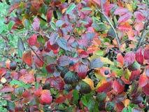Красочные листья осени, Литва Стоковое Изображение