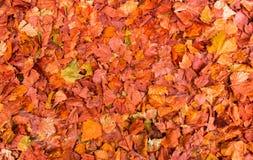 Красочные листья осени на том основании, естественная предпосылка стоковое изображение