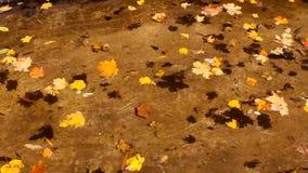 Красочные листья осени плавают на поверхность прозрачной воды акции видеоматериалы