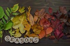Красочные листья осени с словом СЕЗОНАМИ Стоковое фото RF