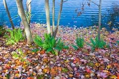 Красочные листья осени упаденные к земле и воде стоковая фотография