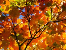 Красочные листья падения на предпосылке конспекта дерева стоковое фото rf