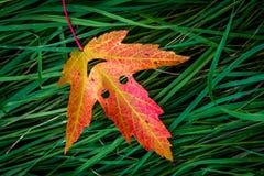 Красочные лист осени стоковое фото