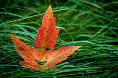 Красочные лист осени стоковые изображения rf