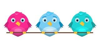 Красочные милые птицы сидя на ветви Стоковые Изображения RF