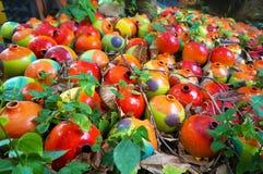 Красочные опарникы лежа на поле Стоковое Фото