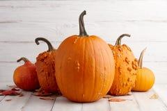 Красочные оранжевые тыквы на хеллоуин и благодарение Стоковое Фото