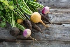 Красочные органические здоровые черные редиски и турнепсы для неподдельный садовничать Стоковая Фотография