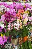 Красочные орхидеи в цветочных горшках на выставке цветов Стоковое Фото