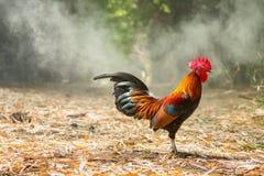 Красочные одичалые цыплята стоковые фото