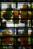 Красочные пластиковые игрушки вися в дисплее окна, за закрытыми воротами магазина розничной торговли, остров Staten, Нью-Йорк стоковые фотографии rf