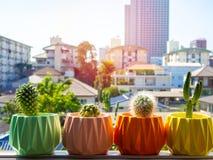 Красочные покрашенные геометрические конкретные плантаторы с заводом кактуса Покрашенные конкретные баки для домашнего украшения стоковое фото rf