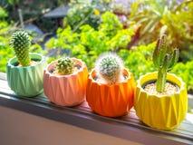 Красочные покрашенные геометрические конкретные плантаторы с заводом кактуса Покрашенные конкретные баки для домашнего украшения стоковые фотографии rf