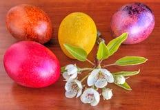 Красочные покрашенные пасхальные яйца и свежая весна цветут на деревянной предпосылке стоковые изображения rf