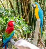 Красочные попугаи вытаращить на одине другого стоковая фотография rf