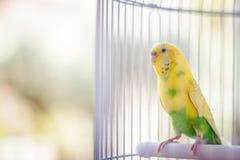 Красочные попугаи в клетке стоковое фото