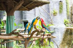 Красочные попугаи на ветвях стоковое изображение rf