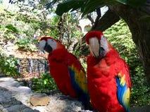 Попугаи стоковое фото rf