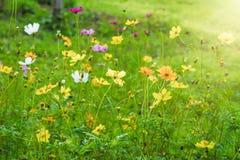 Красочные поле полевых цветков и солнечный свет в утре Selectiv Стоковые Изображения RF