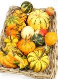 Красочные разнообразия тыкв, тыкв и сквошей на белой предпосылке стоковые фото