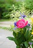 Красочные различные и различные цветки с зеленой предпосылкой, концом вверх, день матерей, букет полевых цветков Стоковая Фотография