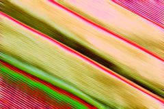 Красочные раскосные абстрактные линии Стоковые Фотографии RF