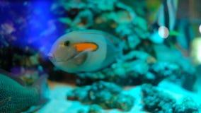 Красочные рыбы в аквариуме акции видеоматериалы