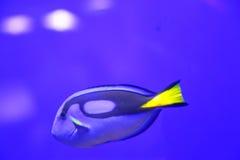 Красочные рыбы в зеленом цвете - подводной жизни Стоковое фото RF