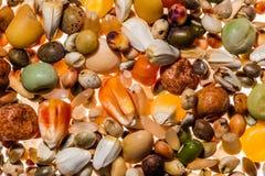 Красочные семена голубя стоковые изображения rf