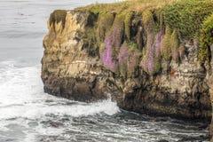 Красочные скалы Santa Cruz - Калифорния стоковое изображение rf