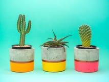 Красочные современные конкретные плантаторы с заводами кактуса Покрашенные конкретные баки для домашнего украшения стоковые изображения rf