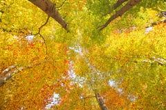 Красочные солнечные кроны дерева сезона осени Стоковые Фотографии RF