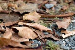Красочные сухие лист на белых предпосылках стоковое фото rf