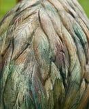 Красочные текстуры на фото камня поверхностном уникальном стоковые изображения