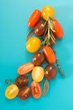 Красочные томаты вишни связывают с травами, на голубой предпосылке Стоковое Фото