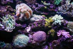 Красочные тропические коралловые рифы подводно стоковое фото