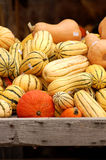 Красочные тыквы сложенные вверх в деревянной клети Стоковые Фото