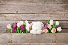 Красочные тюльпаны и кролик карточка пасха Стоковое фото RF