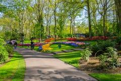 Красочные тюльпаны в Keukenhof садовничают, Голландия Стоковое фото RF