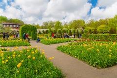 Красочные тюльпаны в Keukenhof садовничают, Голландия Стоковые Изображения