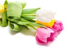 Красочные тюльпаны Стоковая Фотография RF