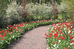 Красочные тюльпаны стоковое фото rf