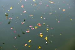 Красочные флористические предложения, лепестки, цветки и гирлянды, плавая в озеро Pushkar, Индия Стоковое Фото